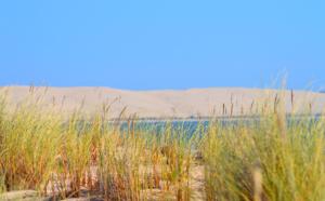 La dune et son environnement
