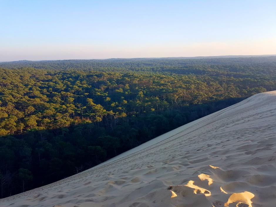 Face est de la dune du Pilat