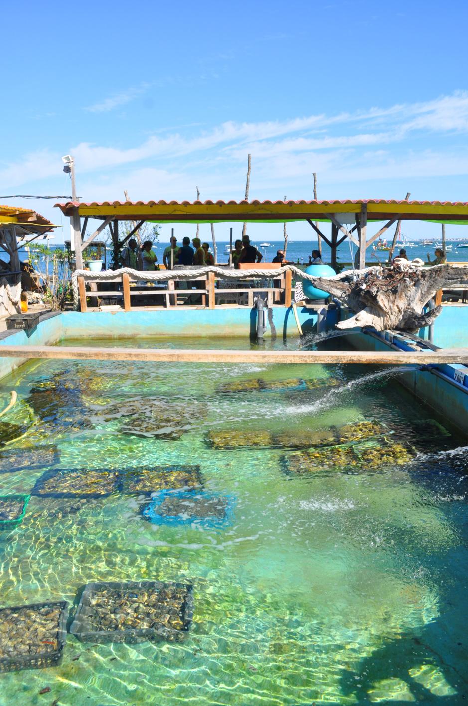 A l'Herbe, même les huîtres ont leur piscine