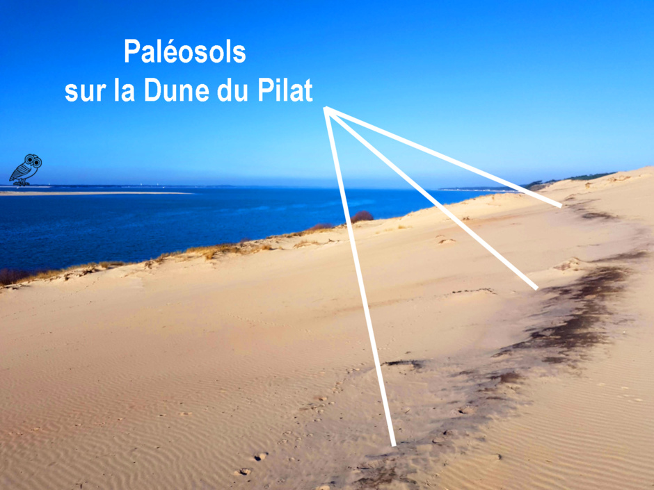 Paléosols Dune du Pilat