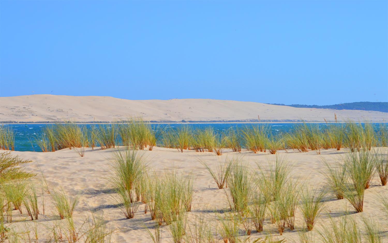 Vert, sable et dune