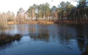 Journées mondiales des zones humides sur le Bassin d' Arcachon