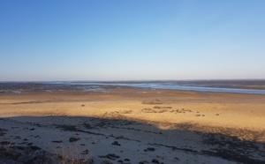 Près salé entre Gujan et La Teste face bassin d'Arcachon