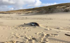 Dauphin retrouvé mort au Cap-Ferret après la tempête