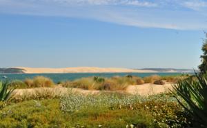 Verdure et dune du Pilat