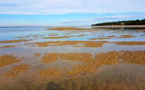 Rare photo du banc de sable de Pereire à marée montante