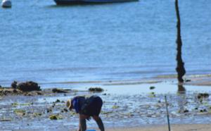 Ramassage sur une plage du Bassin d'Arcachon