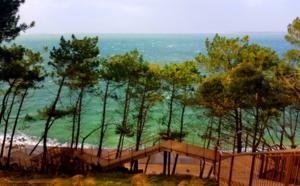 Bassin d'Arcachon vert pin