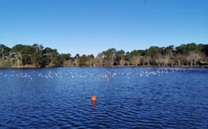 Lac de la Magdeleine, une journée d'hiver à Gujan Mestras